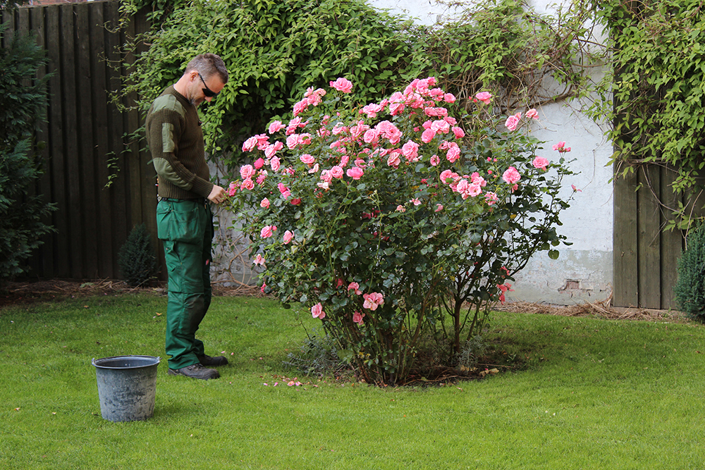 Gartner og blomster